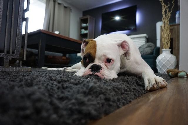 pet property damage